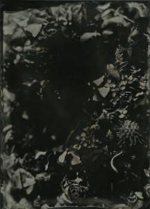 wetplate collodion photograph of flower wreath.