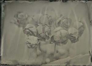 roses_2_29112014