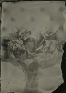 Shot today: Valentine's bouquet, Lea's Portrait collodion, f4, 7 seconds, overcast day.