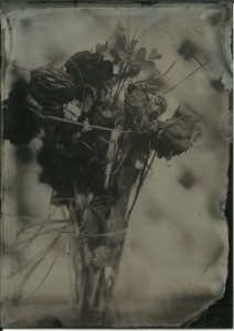 Shot today: Valentine's bouquet. Old Workhorse collodion, 14 seconds, f4, overcast day.