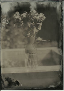 Roses (dry), full sun, f11 4 seconds. 13x18cm (5x7in) black aluminum.