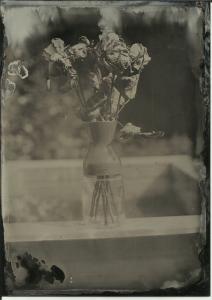 Roses (dry), full sun, f11 4 seconds. 13x18cm (5x7in) black aluminum.