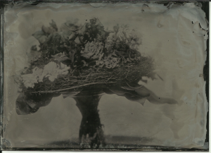 Bouquet, Bohemia collodion (old batch), f11 at about 7 seconds, full sun