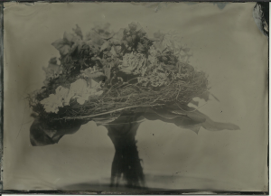 Bouquet, Lea's portrait collodion (old batch), f11 at about 7 seconds, full sun.