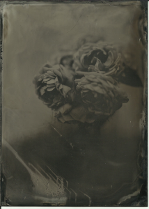 Roses from bush in front of house, glass vase, grey table in front of white wall. Partly sunny. f4.5 or so, 3 seconds, Old Workhorse collodion (about a year old).