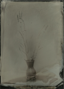 Lavender from the bush in front of our house. 13x18cm, black aluminum, Bohemia collodion, f3.5 2-3 seconds, overcast, sugar developer 10-12 seconds.