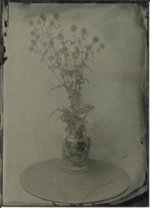 Thistles, F8, 10 seconds, shade, hot day. Reh's new generation collodion