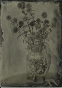 Thistles. F11, 20 seconds, Reh's new generation collodion, shade, hot day.